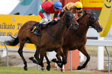 Annie Higgins will be attempting to add the Lindauer City Of Auckland Cup to her Waikato Gold Cup at Ellerslie today. Photo / Christine Cornege 