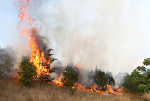 Homeowners were forced to battle a fierce fire that scorched four hectares of long grass. Photo / Duncan Brown