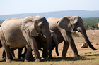 Addo - Elephant country. Photo / Thinkstock