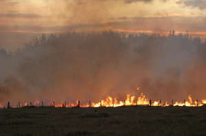 The blaze spread quickly, burning about 3ha of scrub and pasture. Photo / Thinkstock