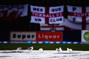 Seagulls bath on the pitch in the rain during day one of the First Test match between New Zealand and England. Photo / Getty Images.
