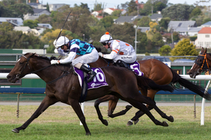 Habibi outstays Fix to win the TV3 NZ Derby at Ellerslie on Saturday. Photo / Richard Robinson