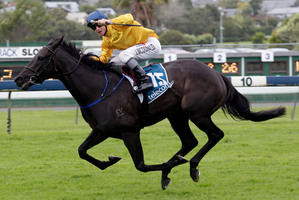 James McDonald's record on Silent Achiever is four wins, including the NZ Derby, and one second. Photo / Richard Robinson