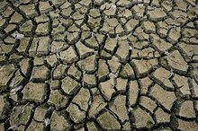 A drought was officially declared in Northland a week ago after a big dry started sweeping the region in November. Photo / David White