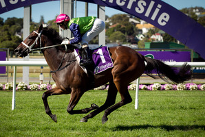Avondale Cup winner Sangster is favoured to win the Auckland Cup at Ellerslie today. Photo / Natalie Slade