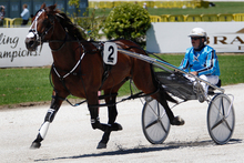 Gold Ace has drawn poorly for the Auckland Trotting Cup on Friday night. Photo / Sarah Ivey