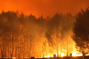 Eight hectares of forest has been burned. Photo / HBT
