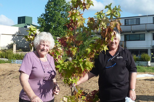 Noma Shepherd and her daughter Gaylene Gray plant a liquidamber. Photo / Johnson Davis