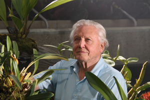 David Attenborough focuses on plants. Photo / Supplied