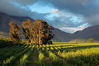 Visit some of South Africa's beautiful vineyards. Photo / Thinkstock