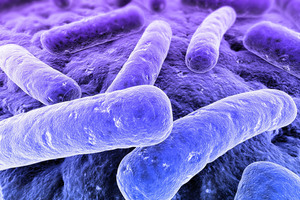 Super-bacteria are becoming more prevalent in New Zealand and around the world. Photo / Getty Images