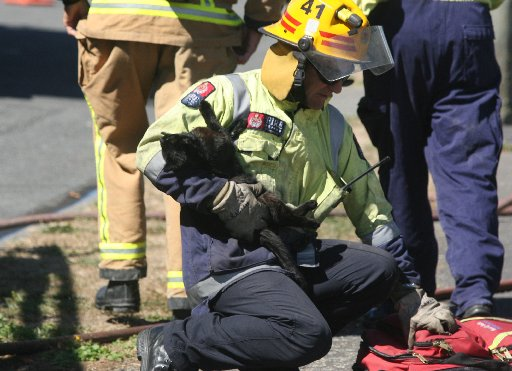 Firefighter Ross Hoare rescues a cat from a house fire in Cole St, Masterton and revives it with oxygen.
