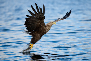 The drone is able to replicate the motion of an eagle's claw. Photo / Thinkstock