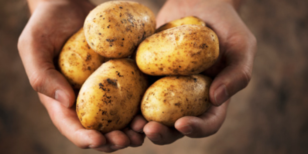 Auckland company Earthpac uses starch captured from washing potatoes to manufacture compostable meat and vegetable trays. Photo / Thinkstock
