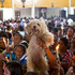 A woman holds up a her dog during an animal blessing ceremony in honor of Saint Lazarus, patron of the sick, at a church in the Monimbo neighborhood of Masaya, Nicaragua. Photo / AP