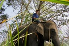Dr Piers Locke rides an elephant in Nepal. Photo / Supplied