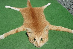 The ginger tabby was found dead on the Napier-Taupo highway. Photo / Supplied