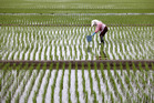 New Zealand and Australia have said commitments to open Japan's agricultural markets are a bottom line. Photo / Bloomberg