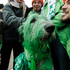 Chicago Mayor Rahm Emanuel left, poses for a photo with 'Shamrock' the green dyed Irish Wolfhound. Photo / AP
