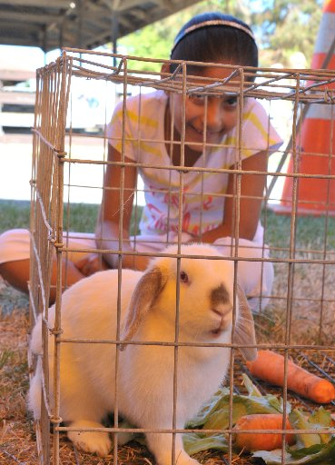 9 yr old Demira Singh of Masterton admires the rabbits on display