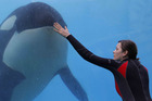 Marion Cotillard shines as whale trainer Stephanie in Rust and Bone. Photo / Supplied