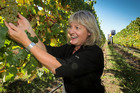 Kate Radburnd of Pask Winery said conditions were so good that growers were making decisions to pick based solely on quality, not what the weather might do next. Photo / APN