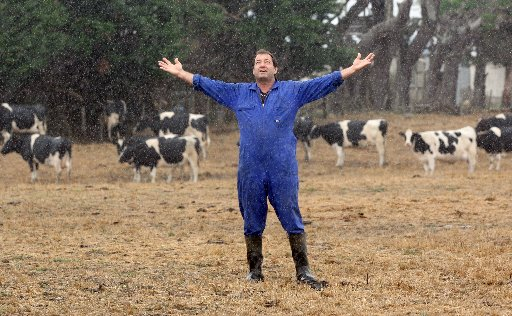 Te Ore Ore dairy farmer Cameron Stuart stands in a paddock he hasn't been able to irrigate for two months as rain finally falls in the Wairarapa. In the background are some of his Fresian autumn calvers.