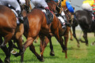 It was wonderful that owner, Queenslander Dick Karreman was on course. Photo / Thinkstock