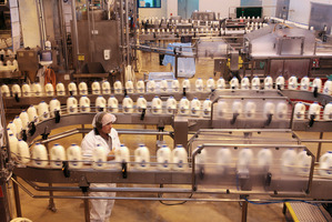 Dairy prices have increased nearly 50 per cent in the past four auctions. Photo / Bloomberg