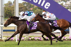 Habibi will face Australia's leading fillies in the Vinery Stakes on Saturday. Photo / Richard Robinson