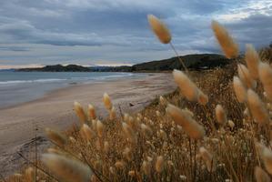Wainui Beach near Gisborne. A quake rattled the region overnight.Photo / Alan Gibson