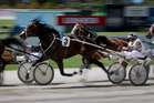 I CAN DOOSIT driven by Mark Purdon. Photo / Sarah Ivey