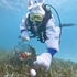 Spencer Slate, costumed as a scuba diving Easter bunny, hides eggs amid eel grass.  Photo / AP