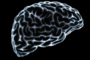 The human brain. Photo / Thinkstock