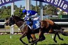 Miss Pelear, already a winner at Ellerslie, is an each-way hope in the Easter Hcp tomorrow.Picture / Sarah Ivey