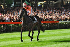 Black Caviar should notch her 25th win on Saturday.  Photo / Getty Images
