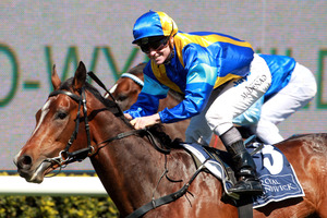 James McDonald will ride It's A Dundeel in the Australian Derby at Randwick today. Photo / Daily Telegraph