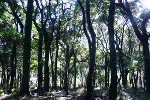 Aorangi Forest. Photo / File