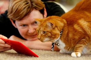 Cats use tablets at Deloraine Cattery. Photo / Michael Cunningham
