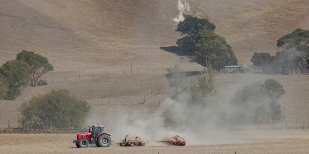 The drought has been the catalyst for a spike in powder prices, says Westpac. Photo / Mark Mitchell