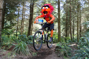 Timo Stanton, aka Animal from The Muppets, contests the 2010 champs. Photo / The Daily Post