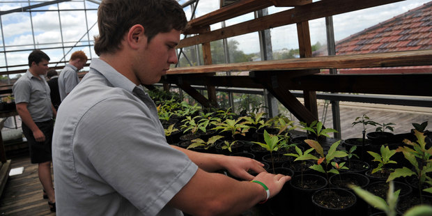 St Paul's Collegiate students planting crops. Photo / Thinkstock