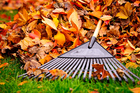 Garden leaves are part of the lifecycle of a garden - use them in your heap. Photo / Getty Images