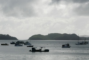 Boats in the Coromandel harbour. File Photo / Greg Bowker