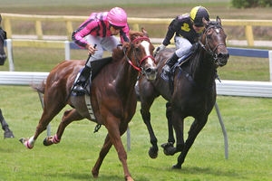 Art Beat, left, is an upset chance in race 6 at Te Rapa. Photo / APN