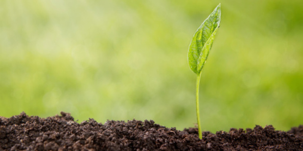 The more genetically modified seeds that are used, the more herbicides are required. Photo / Thinkstock
