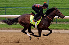 Florida Derby winner Orb will face a tough task in the Kentucky Derby tomorrow after drawing barrier 16. Photo / AP