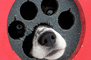 Dog droppings could go from kennel or bin to help power the national grid. Photo / AP