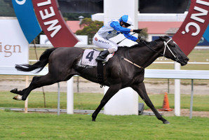 Auckland galloper Mufhasa will face some of the world's elite milers at Sha Tin on Sunday. Photo / Ross Setford