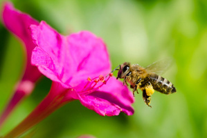 Researchers have created a robot that resembles a bee. Photo / Thinkstock